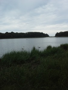 Nauset Marsh Trail